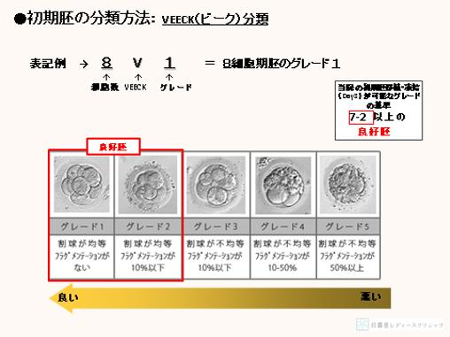確率 胞 胚 盤